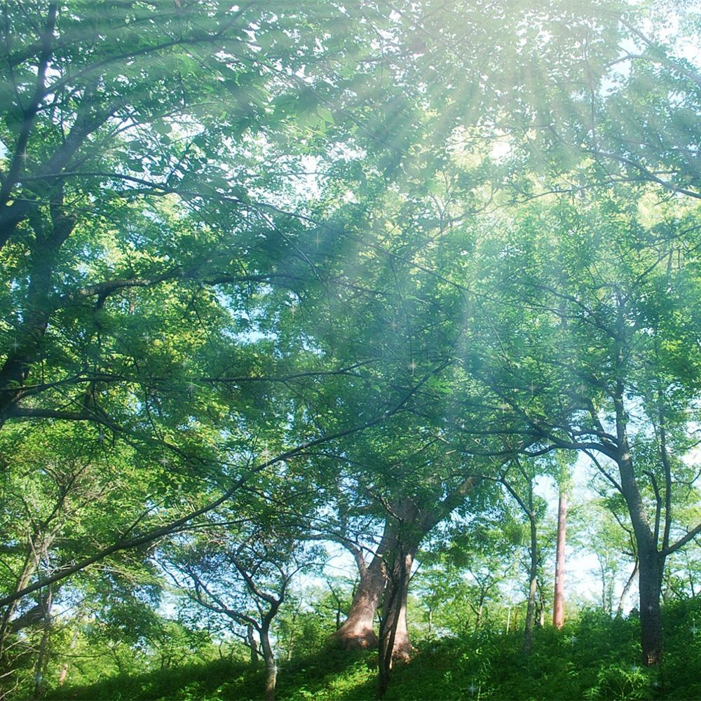 樹木 trees