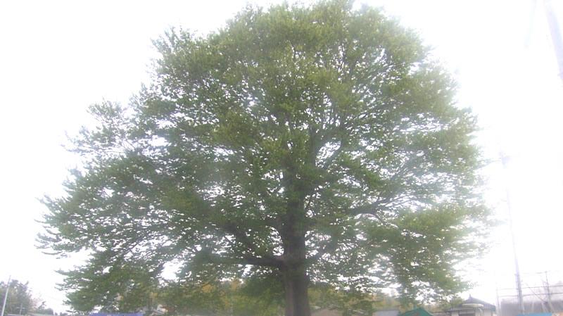 合志市営竹迫住宅樹木剪定
