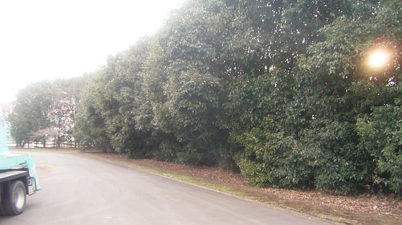 熊本県農業研究センター樹木剪定